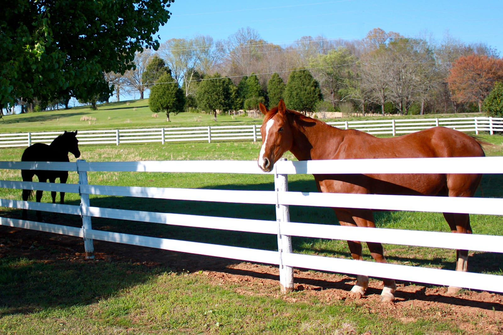 Horses in field with white board fence