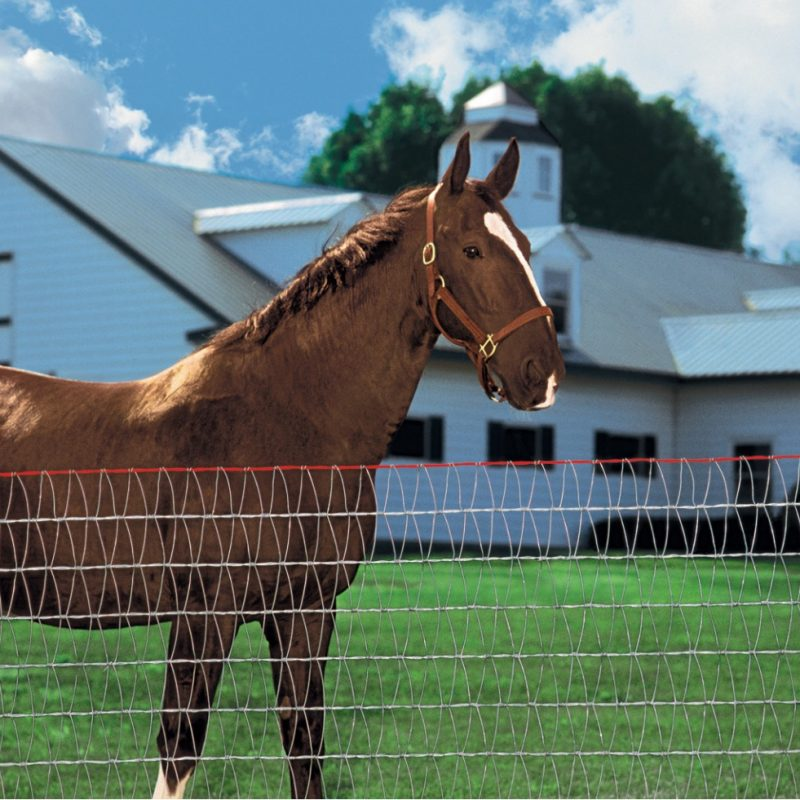 Horse behind fences - Stock and Noble