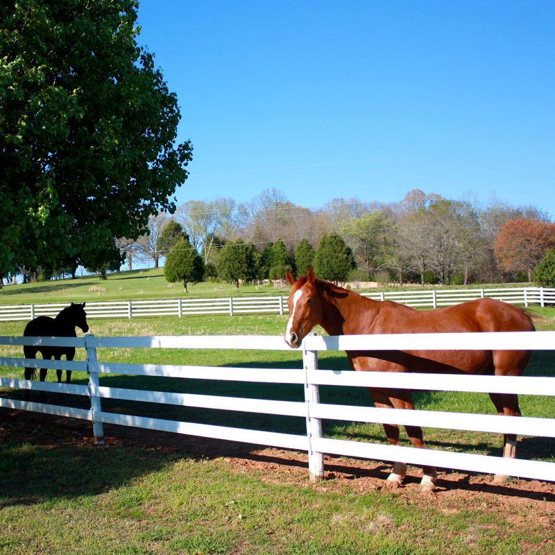 Legacy Fence - Classic board fencing, superior horse safety.