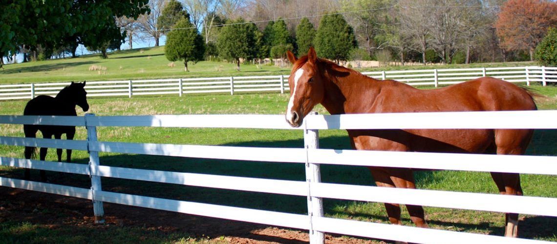 Horses in open field- Stock and Noble